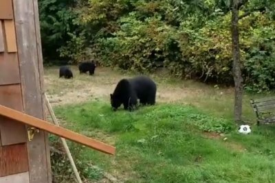Bears comply with Canadian's polite request to leave yard
