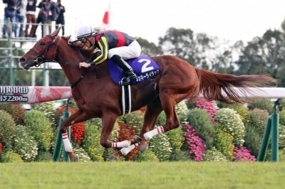 Horse racing stars of future may be on display this weekend