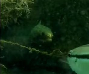 Moray eel attempts 'lightning fast' ambush on fish
