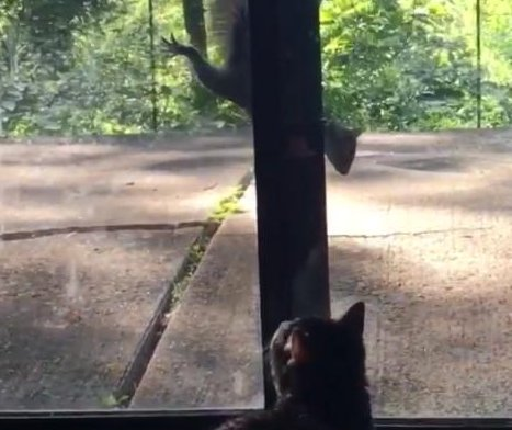 Squirrel strikes up friendship with cat through window