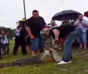 Wildlife officials plead with public to stop harassing Houston alligator