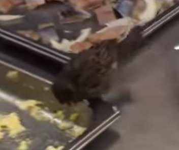 Sparrow lives it up inside shopping center's deli case