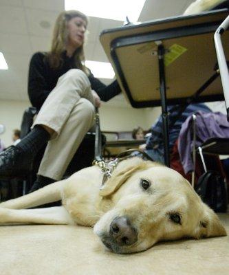 GoPro shows the life of a Labrador