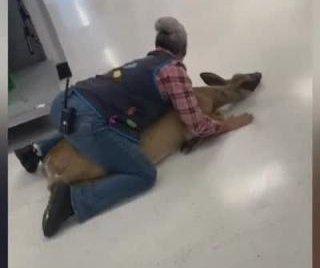 Walmart employee tackles deer inside store