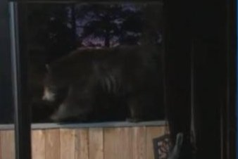 Bear's balcony balancing act caught on camera by homeowner