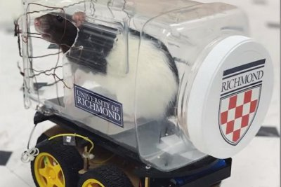 Researchers teach rats to drive, find out it reduces stress