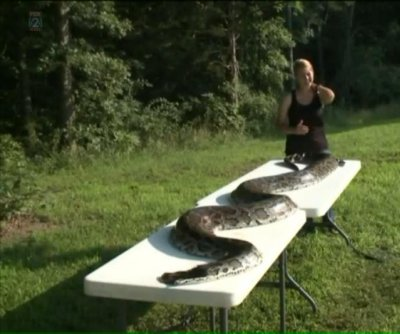 Nearly 15-foot Burmese python killed after prowling Missouri neighborhood