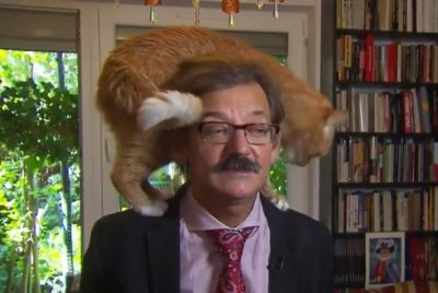Watch:-News-interview-interrupted-by-rude-cat