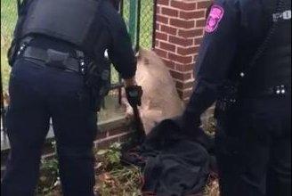 Ohio police free deer stuck in fence
