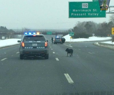 Massachusetts police rescue loose dog found on highway
