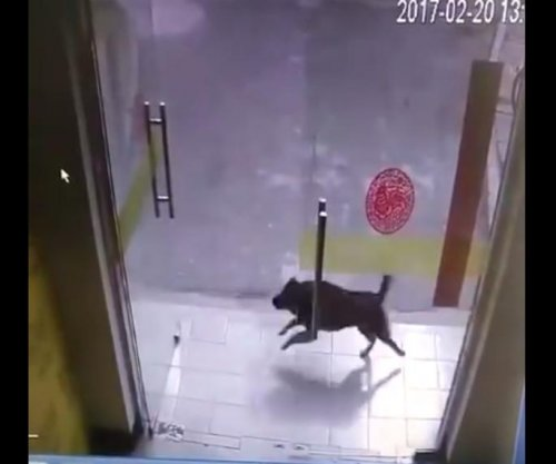 Shopkeeper finds door-shattering vandal was dog pursuing cat