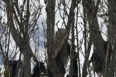 Cat rescued from Utah tree after four days