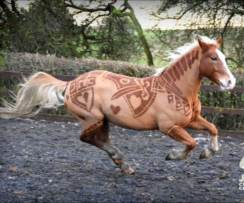 U.K. woman turns horse hair into art with custom clippings