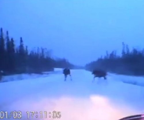 Man driving in northern Ontario has lucky near-miss with three moose
