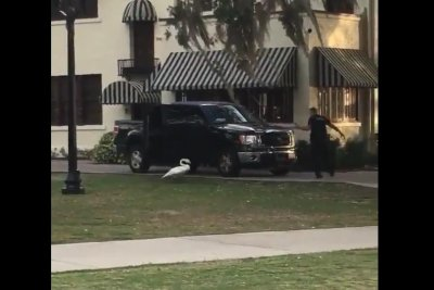 Swan chases Florida police officer around SUV
