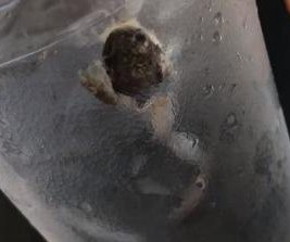 Waffle House customers find dead frog in glass of water