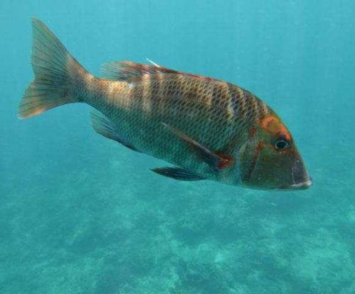 Fish off Australia's coast dive deep to avoid heat