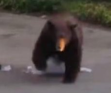 Garbage-stealing bear turns tables on man trying to scare it away in California