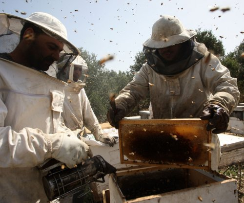 Scientists consider potential of honey bee brood as food source