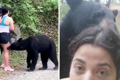 Bear approaches woman in ecological park, appears in selfie
