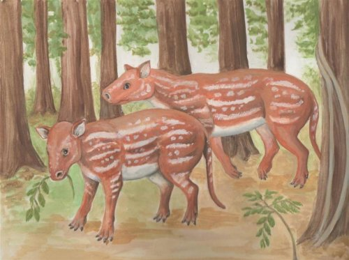 Researchers reveal ancient relative of horses and rhinos