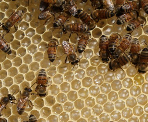 Swarm of bees on jet wing delay flight from Miami airport
