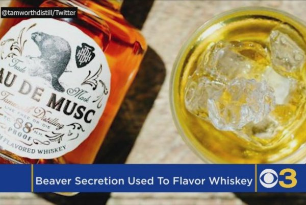 Watch Beaver Flavored Bourbon Released By Distillery