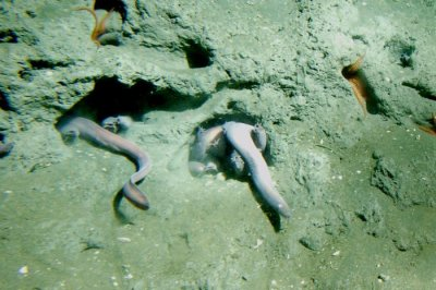 Jawless hagfish forces scientists to rewrite the story of inner ear evolution