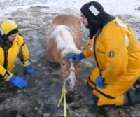 Horse rescued from frozen pond in Michigan