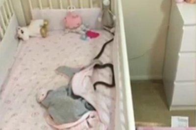 Venomous snake found slithering in baby's crib