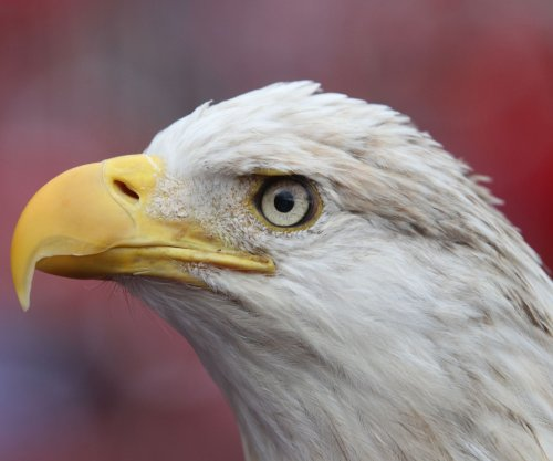 15 charged in South Dakota for trafficking eagles, other protected birds