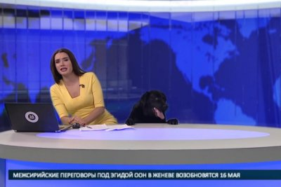 Dog interrupts Russian news broadcast, anchor a 'cat person'