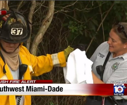 Florida brush fire kitten rescue caught on news camera
