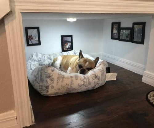 Thoughtful dog owner builds pup a special room