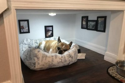 Look Thoughtful dog owner builds pup a special room UPIcom