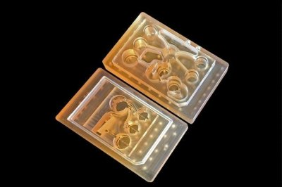 'Body on a chip' may help drug evaluation by replicating multiple organs