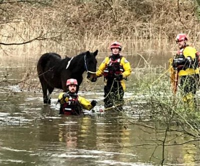 Pony rescued from flooded field amid stormy weather in England