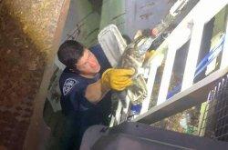 Kitten rescued from 20-foot deep storm drain on Long Island