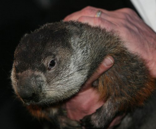 Police issue arrest warrant for Punxsutawney Phil