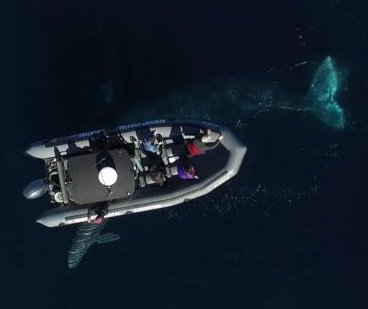 Baby gray whale and 45-foot mother pass directly under whale watching boat