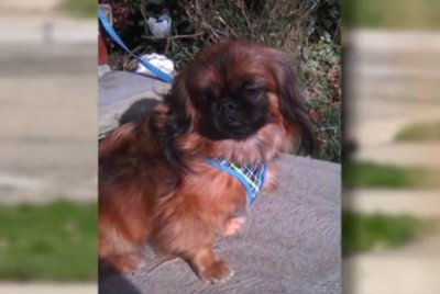 Missing Ohio dog turns up in Florida exactly one year later