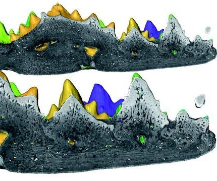 Fish fossil offers earliest example of teeth