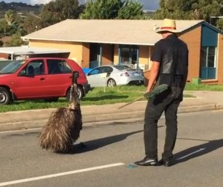 Emu wanders into residential neighborhood, refuses to leave road
