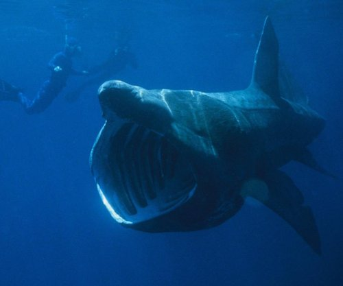 Sharks, humans shared common ancestor 440 million years ago