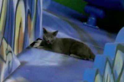 'Rally Cat' infiltrates Miami Marlins Home Run sculpture