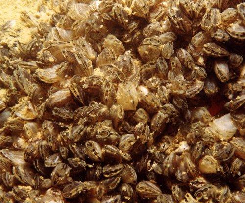 Scientists: Invading golden mussels threaten Amazon