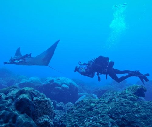 Researchers locate world's first known manta ray nursery