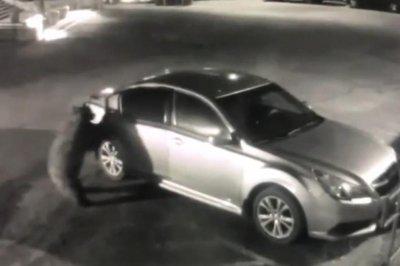 Brazen bear opens car door in California courthouse parking lot