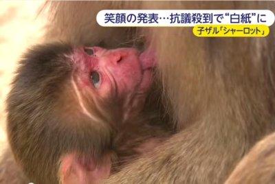 Japanese zoo backtracks on royal-inspired 'Charlotte' monkey name
