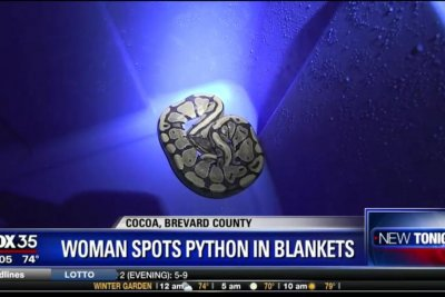 Florida woman doing laundry finds python trying to eat rat's blanket
